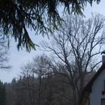Památný dub - Pusté skaliny