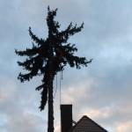 Kácení stromů